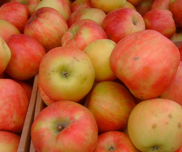 Honeycrisp-apples-Seattle